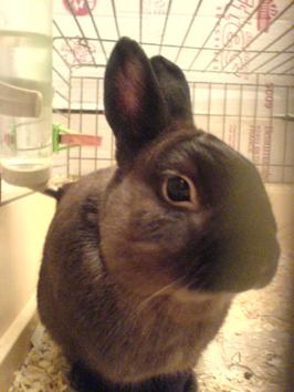 肥兔子的第一张身份照 première photo d'identidé de lapin