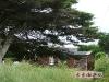 公公的海边小屋