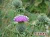 野生仙人球的小花